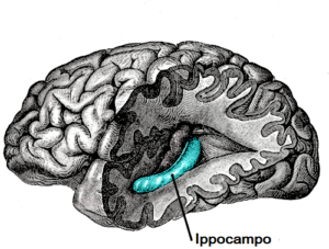 Cervello ippocampo